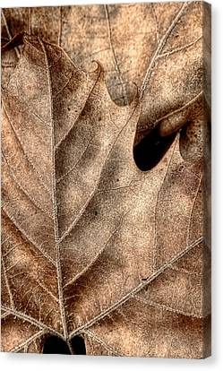 Fallen Leaves II Canvas Print by Tom Mc Nemar