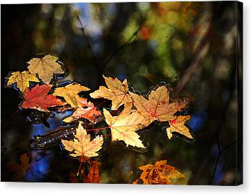 Fallen Leaves On Pond Canvas Print by Debbie Oppermann