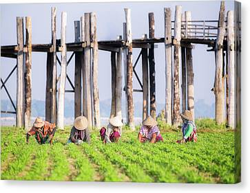 farmers at work around U-Bein Bridge Canvas Print by Anek Suwannaphoom