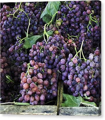 Farmers Market Grapes Canvas Print by Cathie Richardson