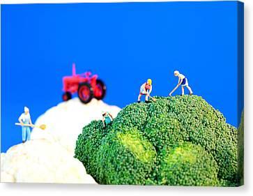 Farming On Broccoli And Cauliflower II Canvas Print by Paul Ge