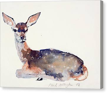 Fawn Canvas Print by Mark Adlington