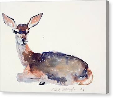 Fawn Canvas Print by Mark Adlington