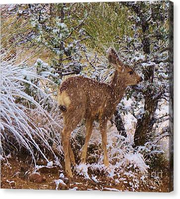 Fawn's First Snow Canvas Print by Feva Fotos