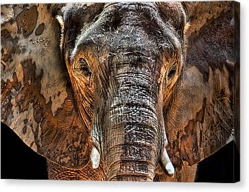 Fearless Canvas Print by Janet Fikar