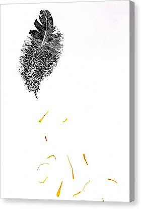 Feather Canvas Print by Bella Larsson