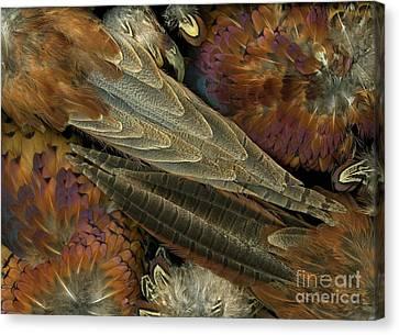 Featherdance Canvas Print by Christian Slanec