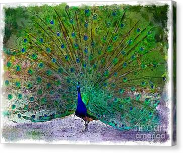 Feathers Aglow Canvas Print by Mary  Swann