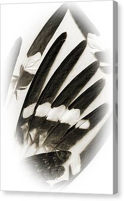 Feathers Canvas Print by Fred Lassmann