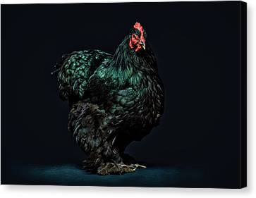 Feathers Canvas Print by John Towner