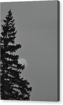 February Morning Moon Canvas Print by Maria Suhr