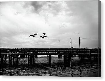 Feeding Gulls Canvas Print by Scott Pellegrin