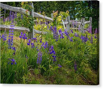 Fence With Lupine And Irises Canvas Print by Diane Moore