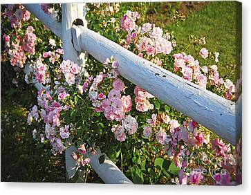 Fence With Pink Roses Canvas Print by Elena Elisseeva