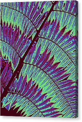 Fern In Technicolor Canvas Print by Ranjini Kandasamy
