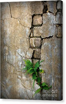 Fern Life Canvas Print by Perry Webster