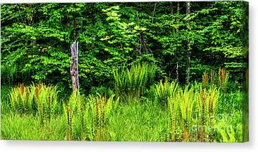 Fern Meadow Canvas Print by Thomas R Fletcher