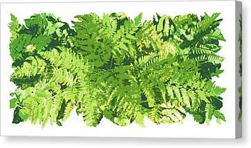 Fern Vignette Canvas Print by JQ Licensing