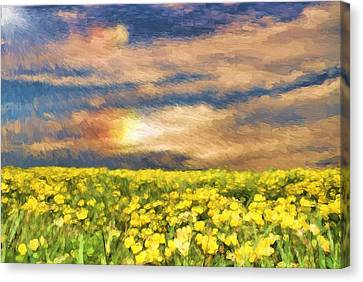 Field Of Yellow Daffodils Canvas Print by Dan Sproul
