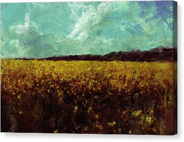 Field Of Yellow Canvas Print by Mark Denham