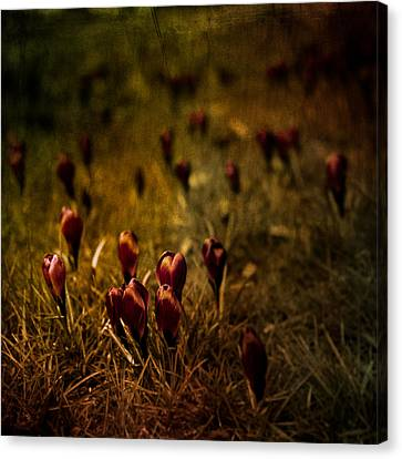 Fields Of Elegance Canvas Print by Loriental Photography