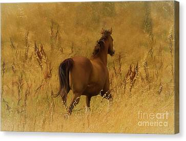 Fields Of Fun Canvas Print by Jacque The Muse Photography
