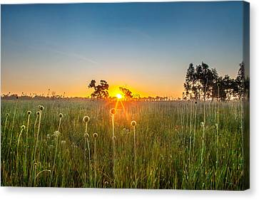 Fields Of Gold Canvas Print by Az Jackson
