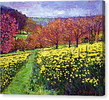 Fields Of Golden Daffodils Canvas Print by David Lloyd Glover