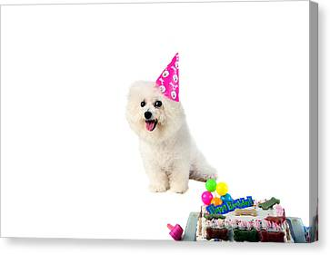 Fifi Loves Birthdays Canvas Print by Michael Ledray