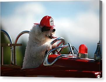 Fifi Saves The Day Canvas Print by Michael Ledray