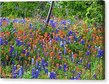 Fine Art America Pic 160 Colored Fence Canvas Print by Darrell Taylor