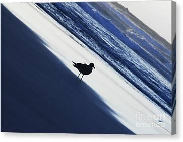 Fine Art - Bird Canvas Print by Jenny Potter