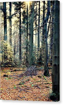 Fir Forest-2 Canvas Print by Henryk Gorecki