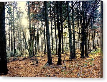 Fir Forest-3 Canvas Print by Henryk Gorecki