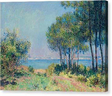 Fir Trees At Varengeville Canvas Print by Claude Monet