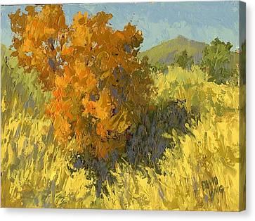 Firery Bush Canvas Print by David King