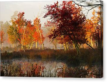 First Light At The Pine Barrens Canvas Print by Louis Dallara