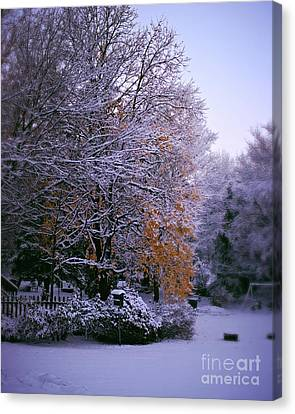 First Snow After Autumn Canvas Print by Frank J Casella