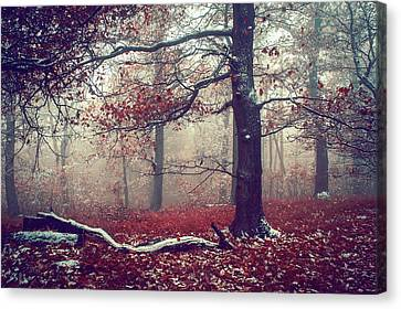 First Snow In Fall Woods Canvas Print by Jenny Rainbow