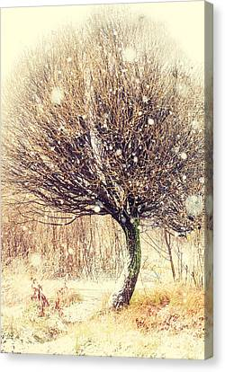 First Snow. Snow Flakes Canvas Print by Jenny Rainbow