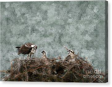 Fish Food For The Baby Osprey Canvas Print by Dan Friend
