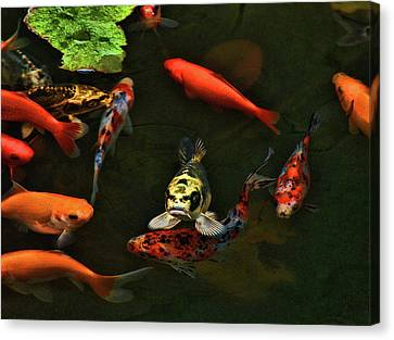 Fish Frown Canvas Print by Joetta West