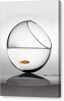 Fish In Fish Bowl Stressed In Danger Canvas Print by Paul Strowger