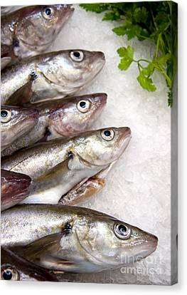 Fish On Ice Canvas Print by Jane Rix