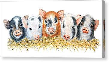 Five Little Pigs Canvas Print by Sandra Moore