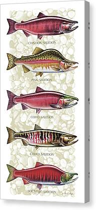 Five Salmon Species  Canvas Print by JQ Licensing
