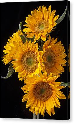 Five Sunflowers Canvas Print by Garry Gay