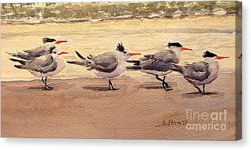 Five Terns Canvas Print by Julianne Felton