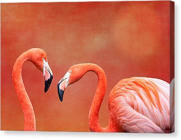 Flamboyant Flamingos Canvas Print by Tom Mc Nemar