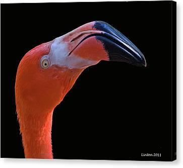Flamingo Canvas Print by Larry Linton